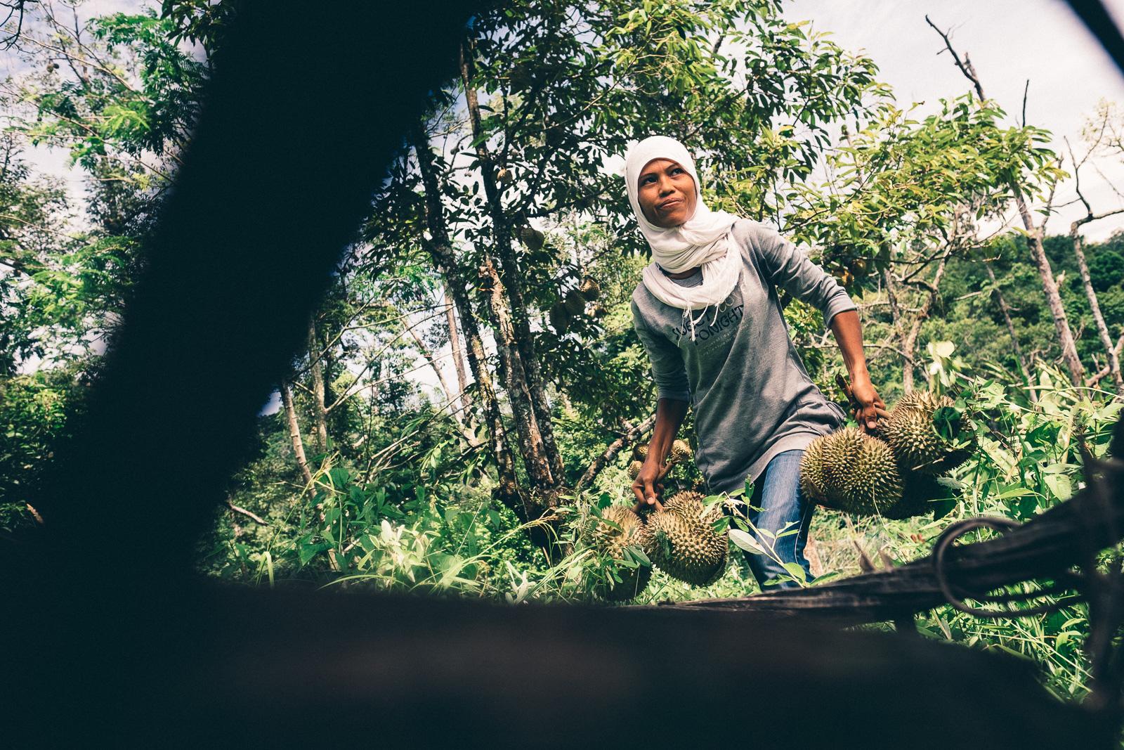 Collecing durian - Penang Editorial Photographer